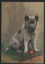 Keeshond dog tobacco cigarette card postcard dogs 1930's #054